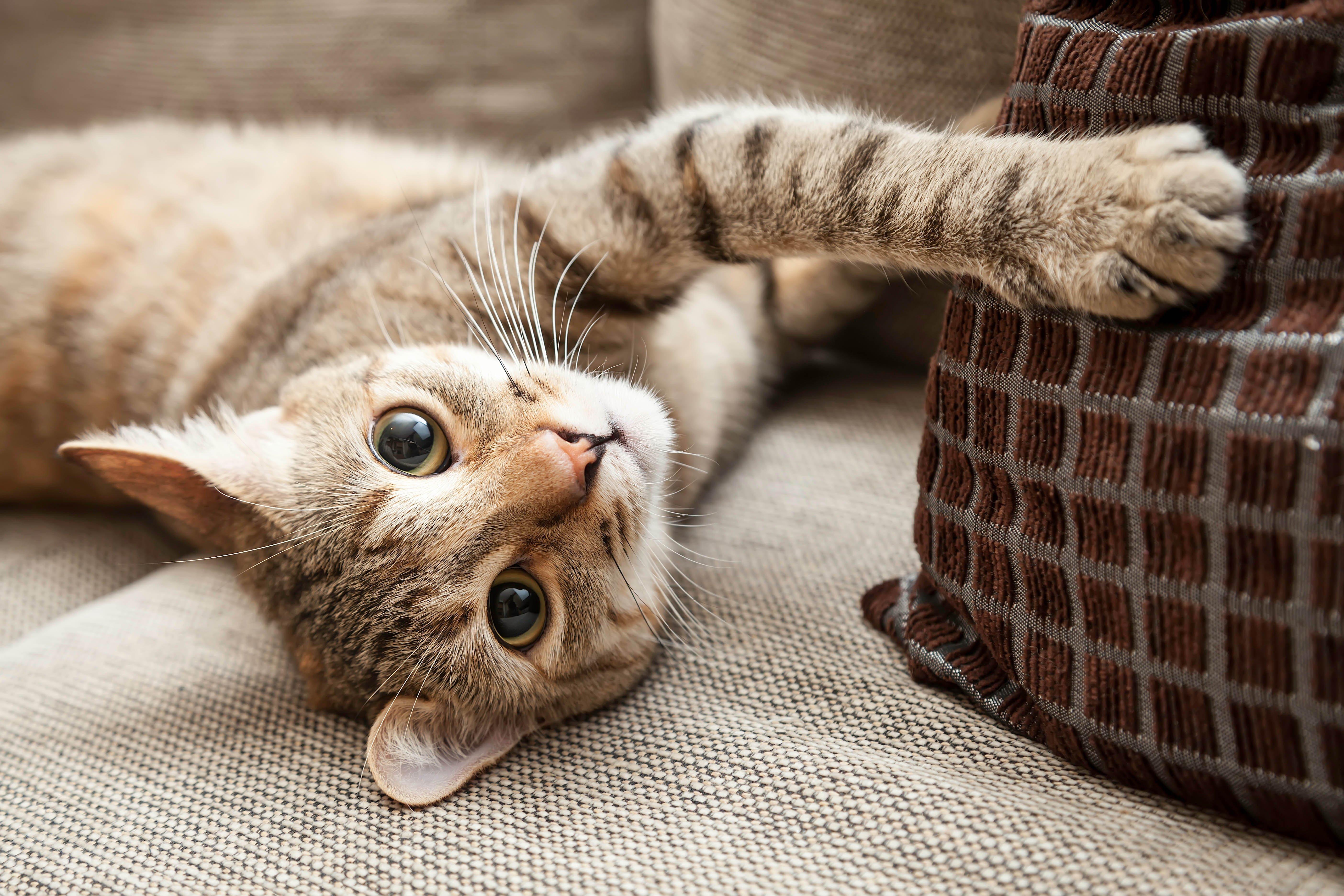 Katze zerkratzt Sofakissen