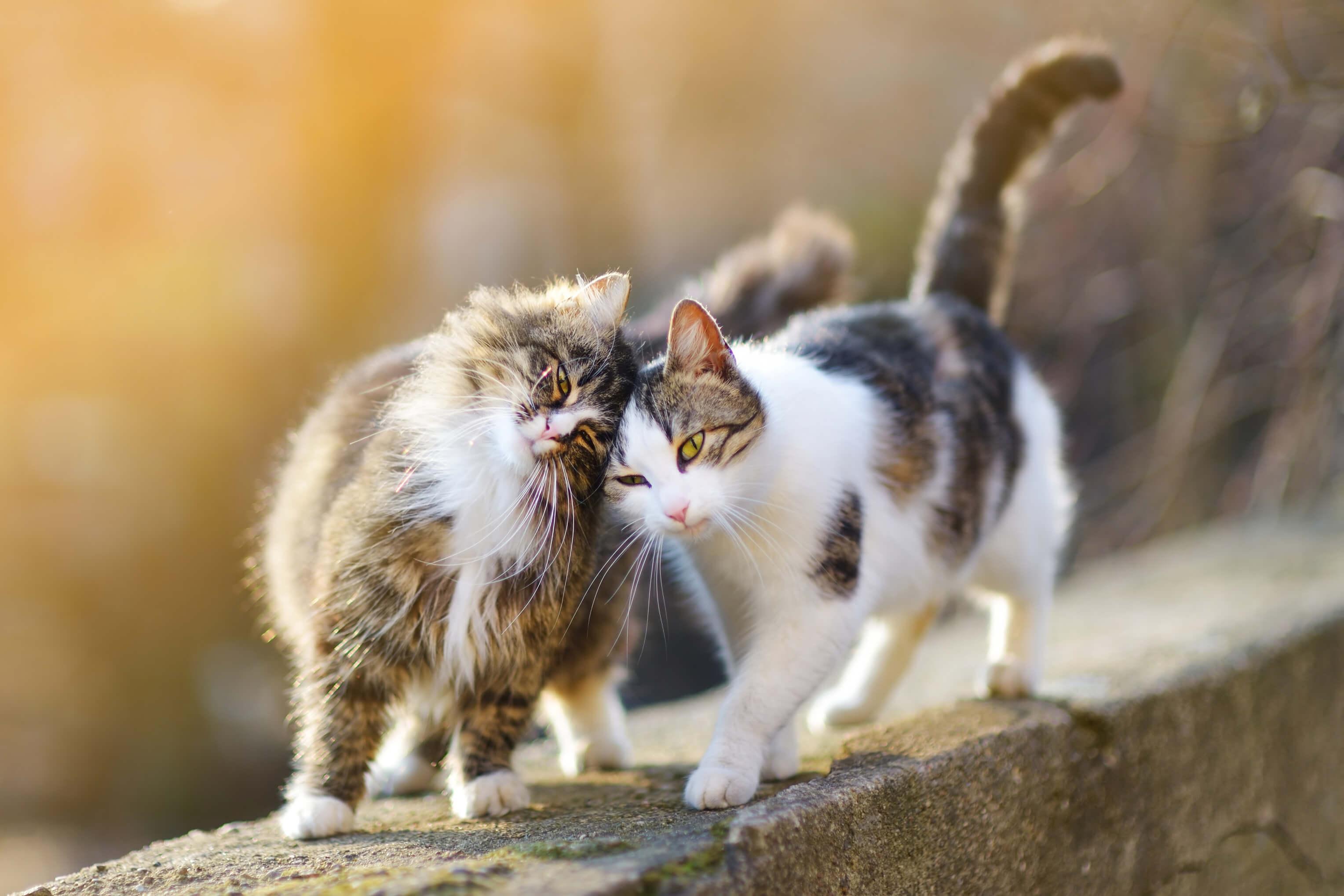 Je ähnlicher die Katzen, desto harmonischer das Zusammenleben