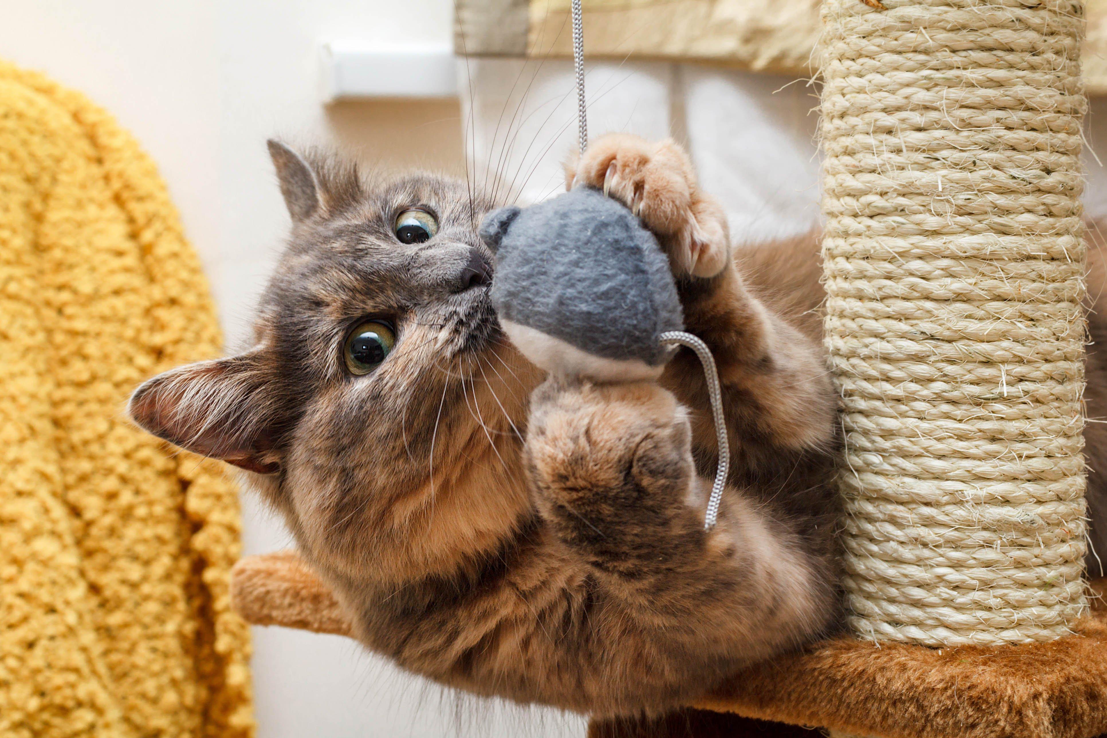 Katze spielt mit Spielzeugmaus auf Kratzbaum