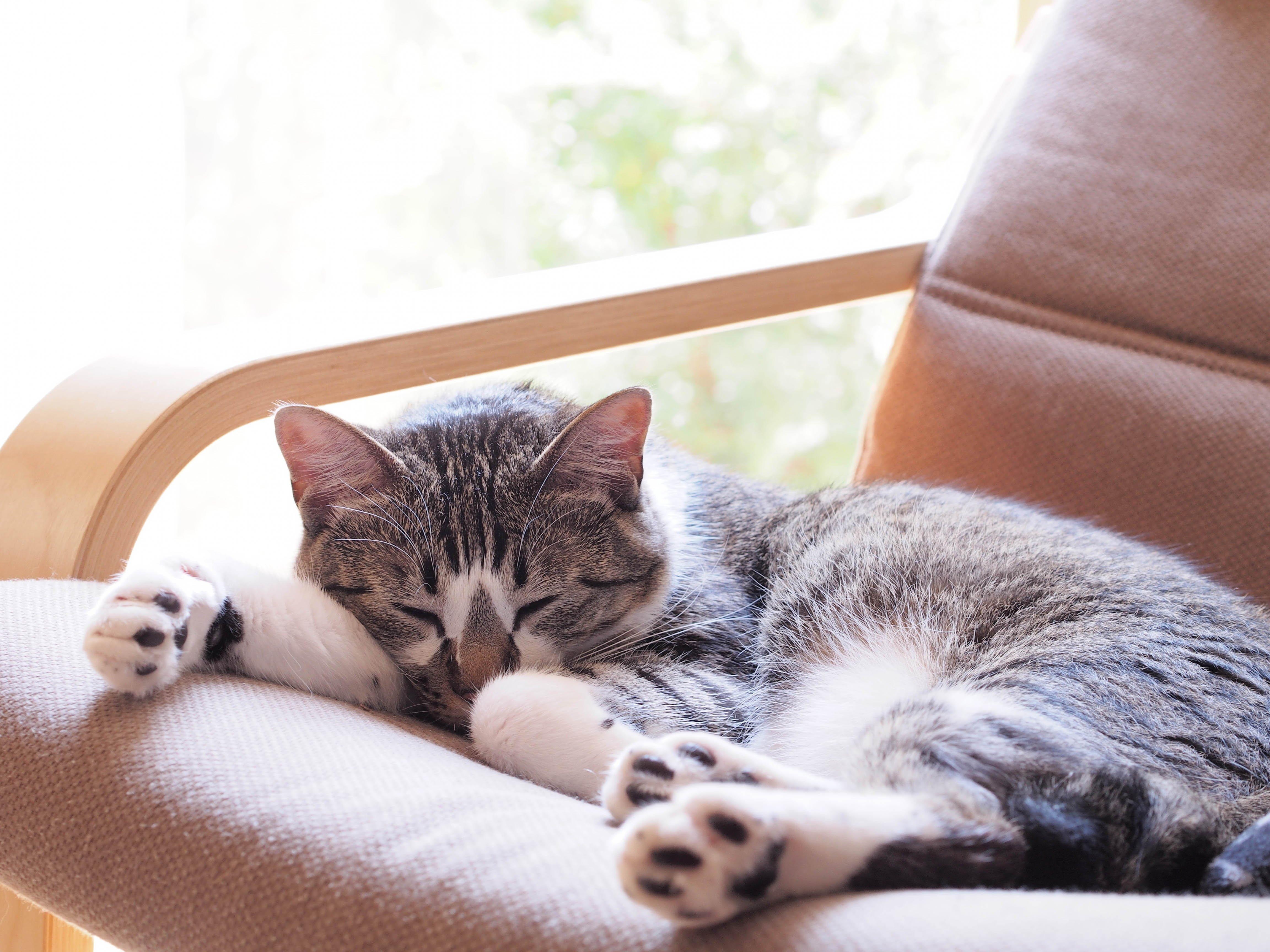 Katze liegt schlafend in Stuhl