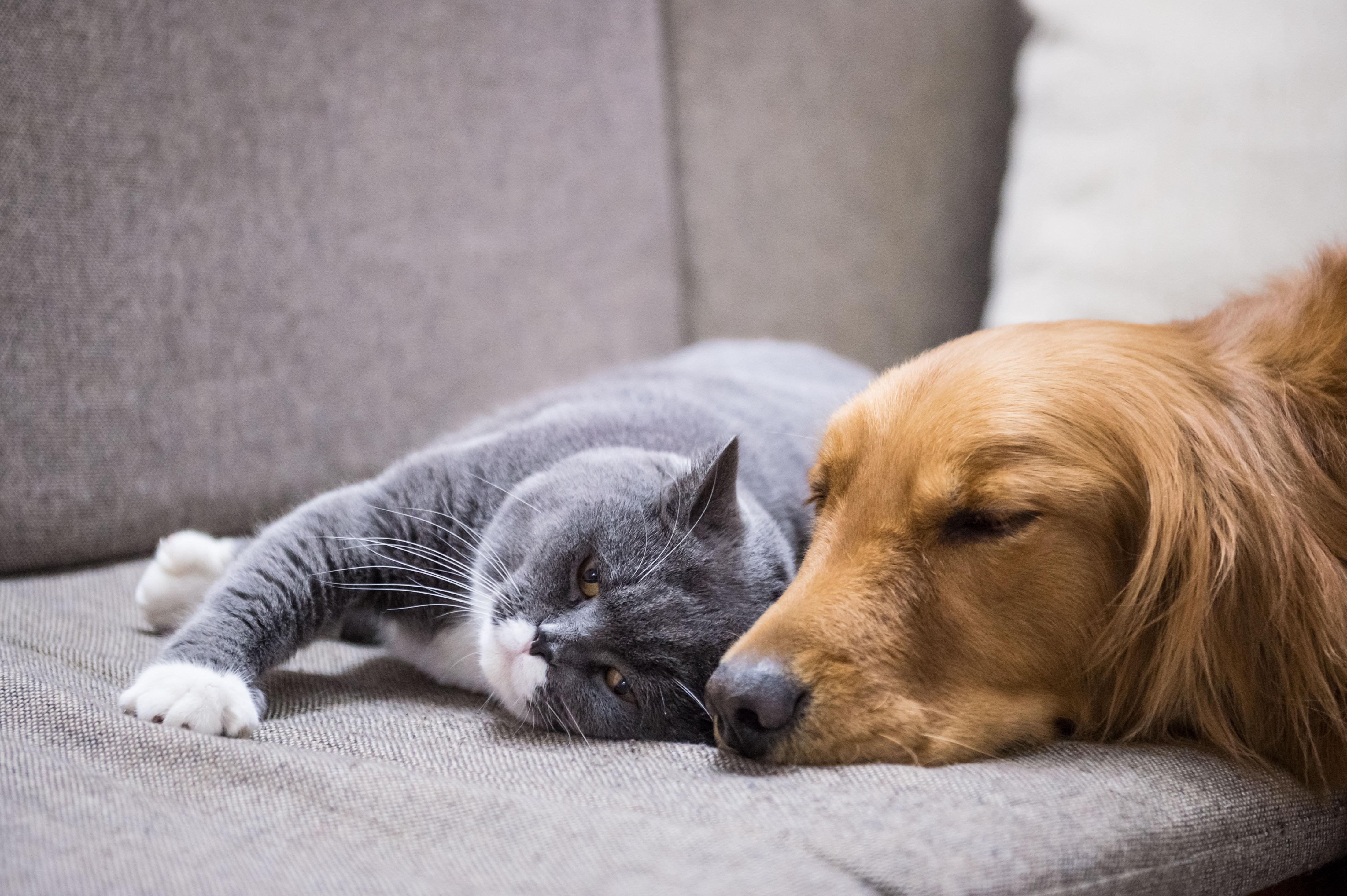 Wie man Katzen und Hunde aneinander gewöhnt | Haustier Blog