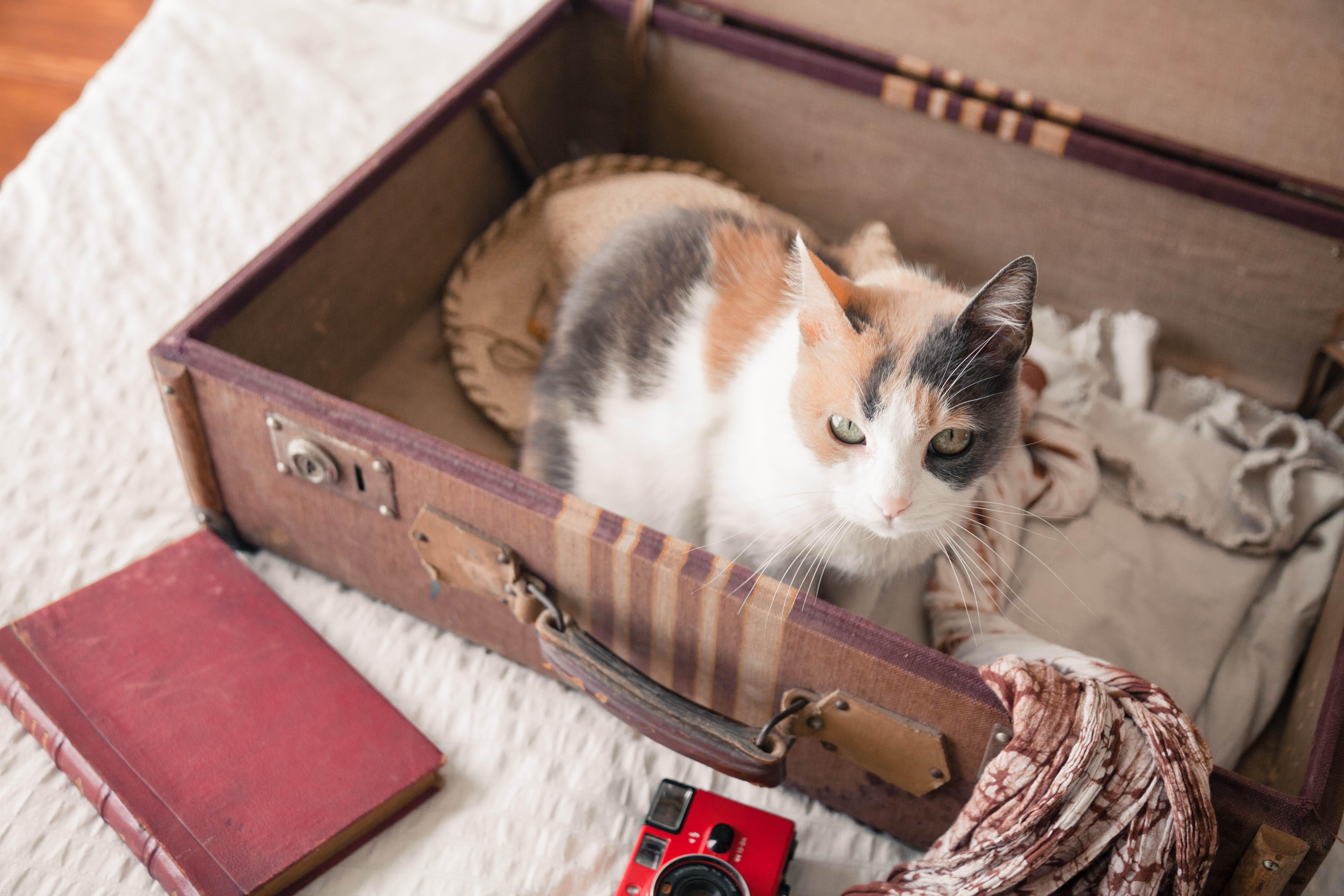 Urlaub mit Katze, Katze in Koffer