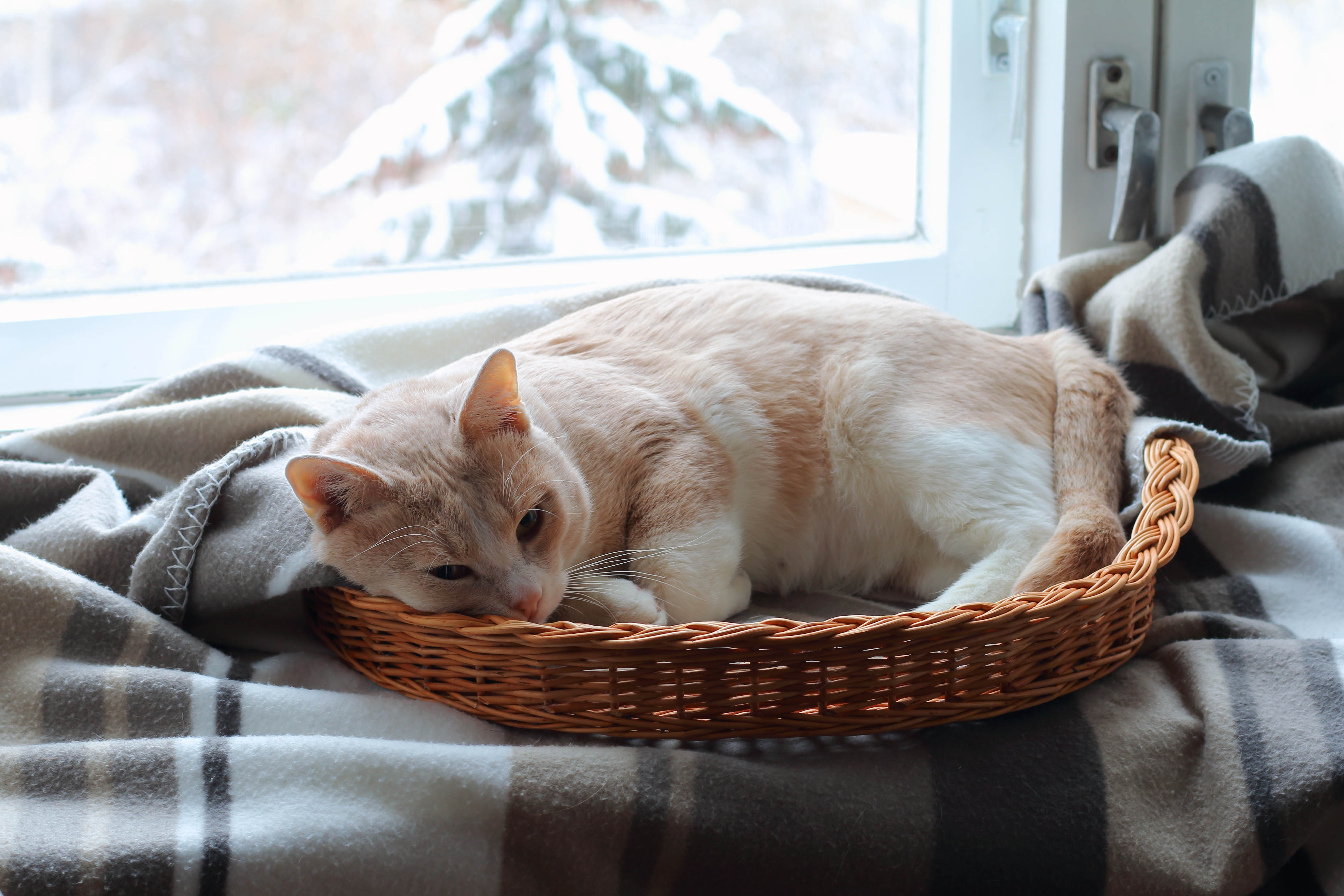 Katze in Korb vor Fenster