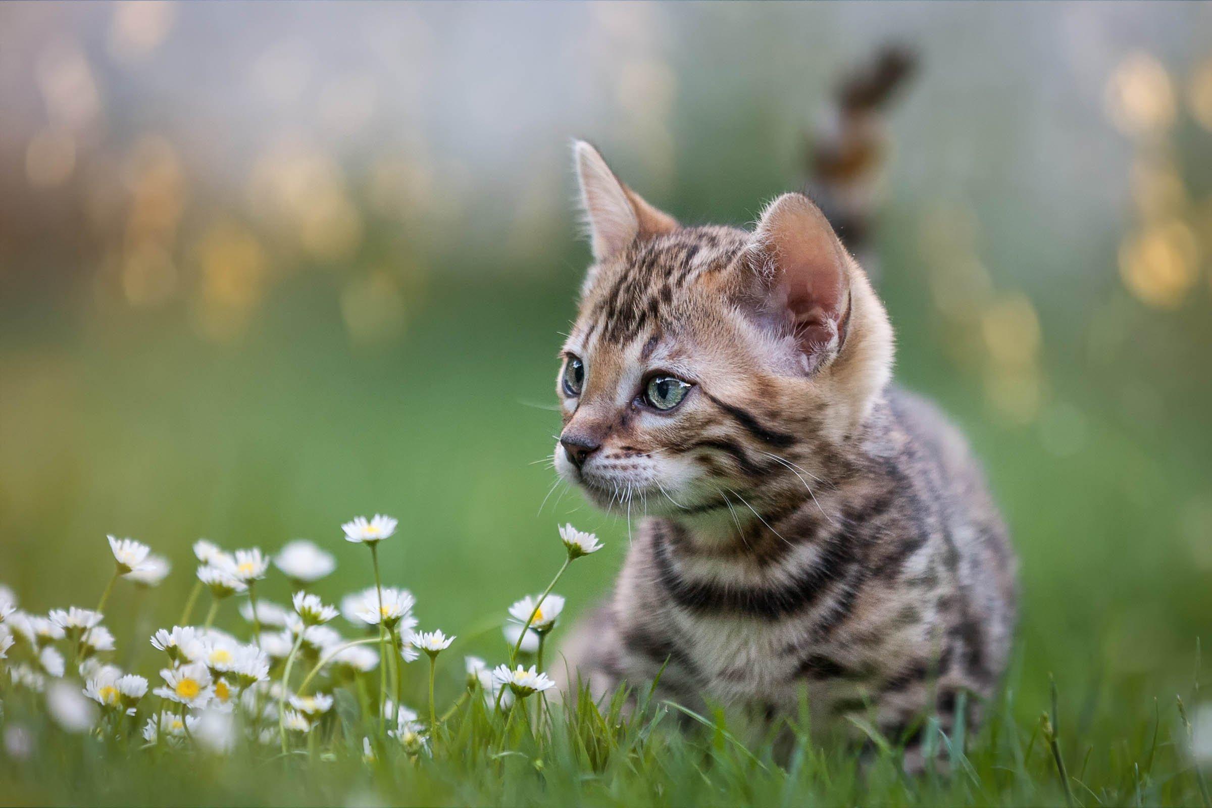 Katzenbaby erkundet eine Wiese