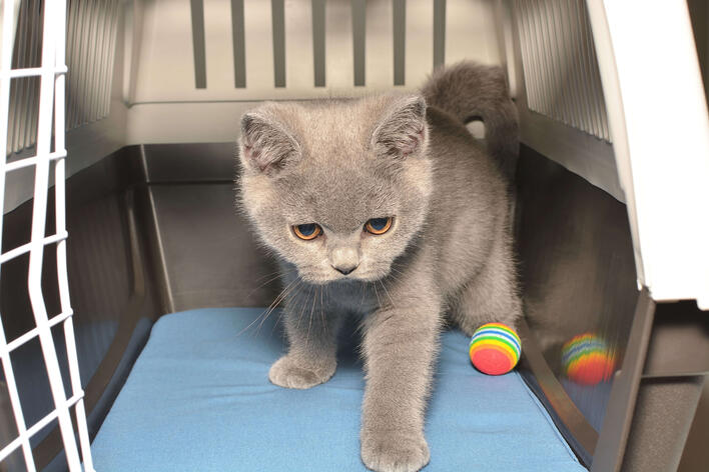 Katze eingewöhnen - die Transportbox ist der sichere Hafen der Katze