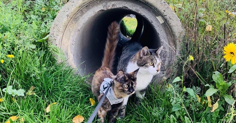 Erfolgreich Katzen zusammenführen ohne fauchen: Phoenix und Luke gemeinsam auf der Wiese