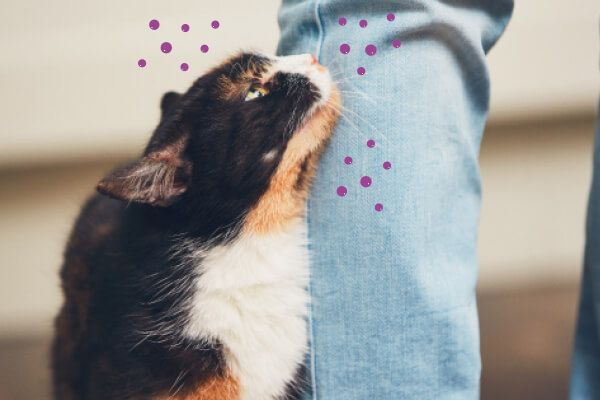 Kattengedrag Leer Jouw Kat Begrijpen