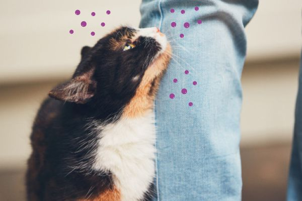 Wat veroorzaakt stress bij katten?