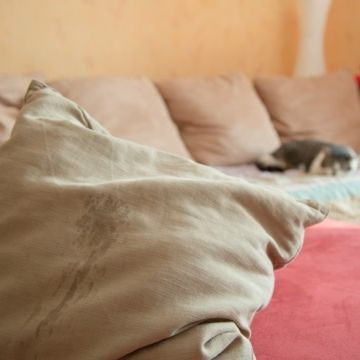 marcaje con orina gato feliway