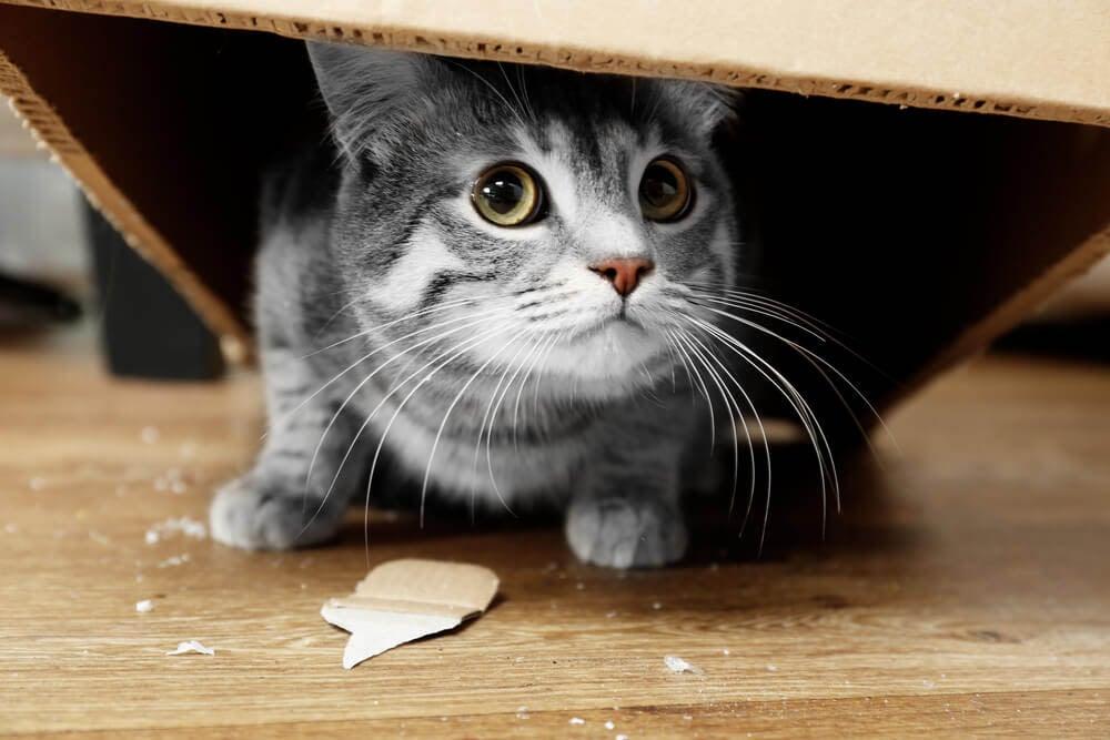 Neue Katze zieht sich zurüc