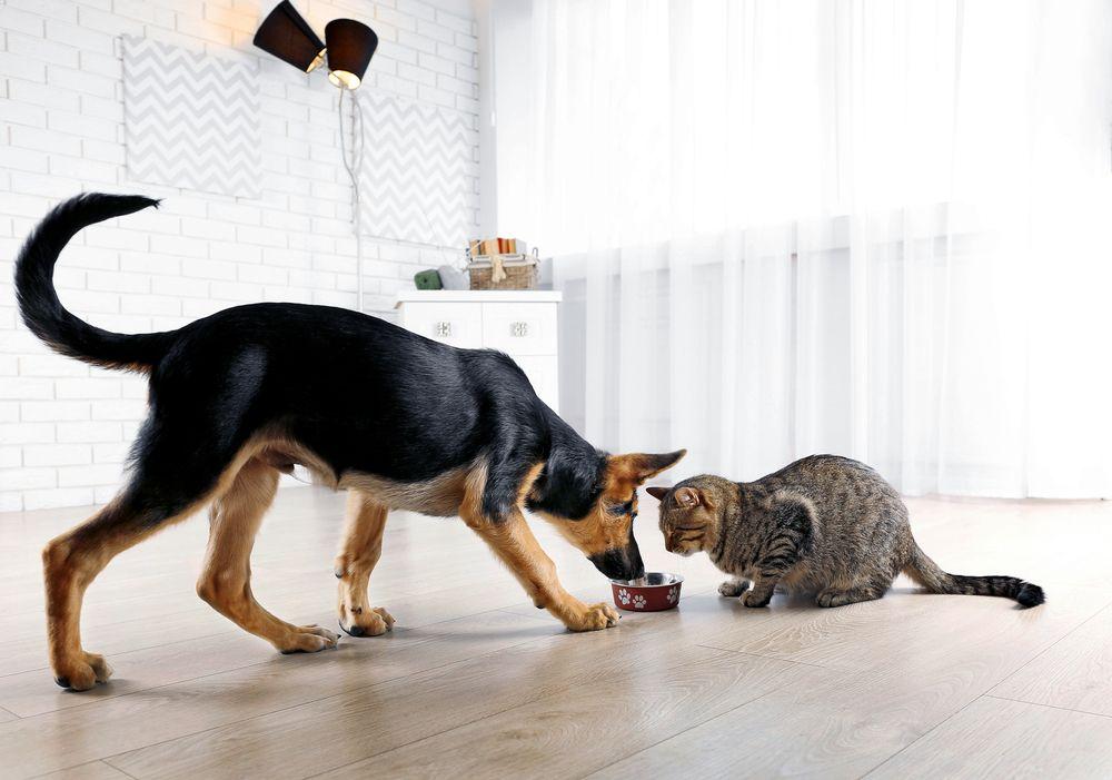 perro y gato en mejores amigos 6