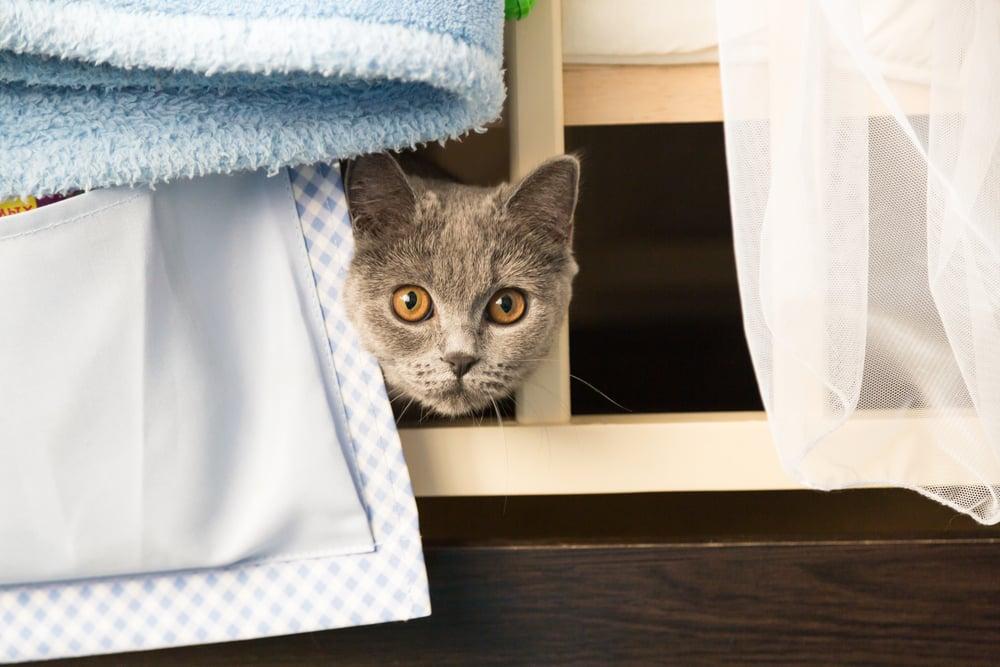 gato escondido entre toalhas