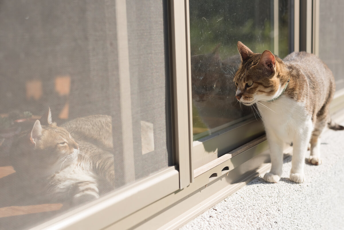 cat neighbours