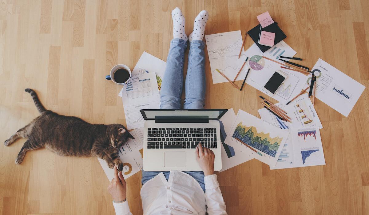 Tipps für das Arbeiten im Homeoffice mit Katze