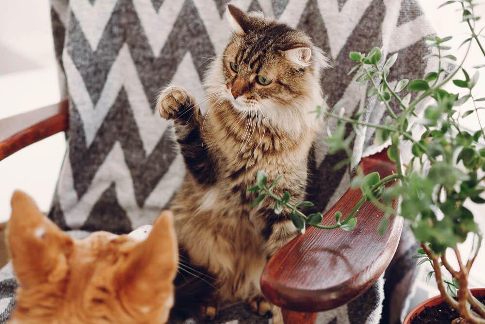 stop cat fighting_2
