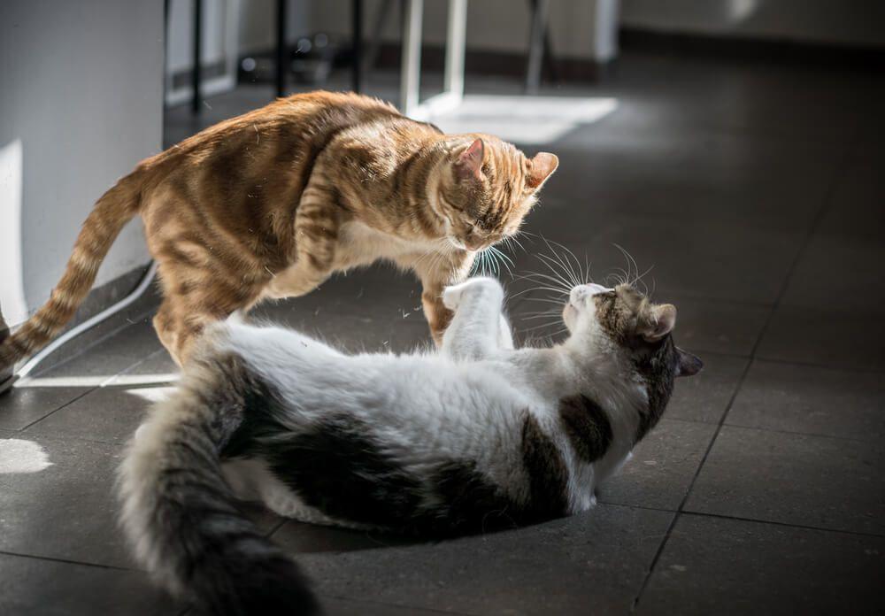 stop alle lotte fra gatti