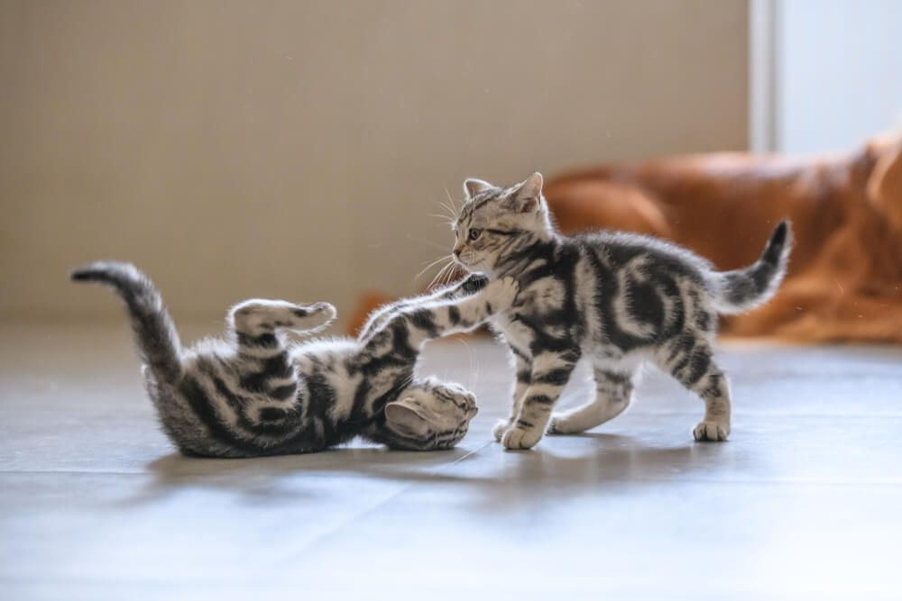 tips to stop cats fighting_1