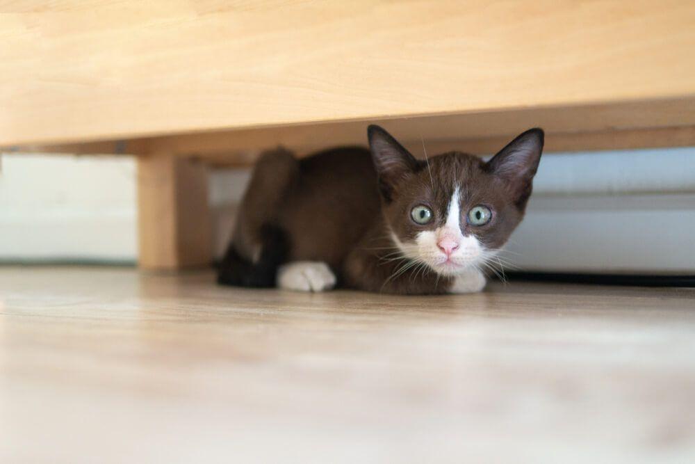 un changement de routine peut faire perdre l'appétit à votre chat