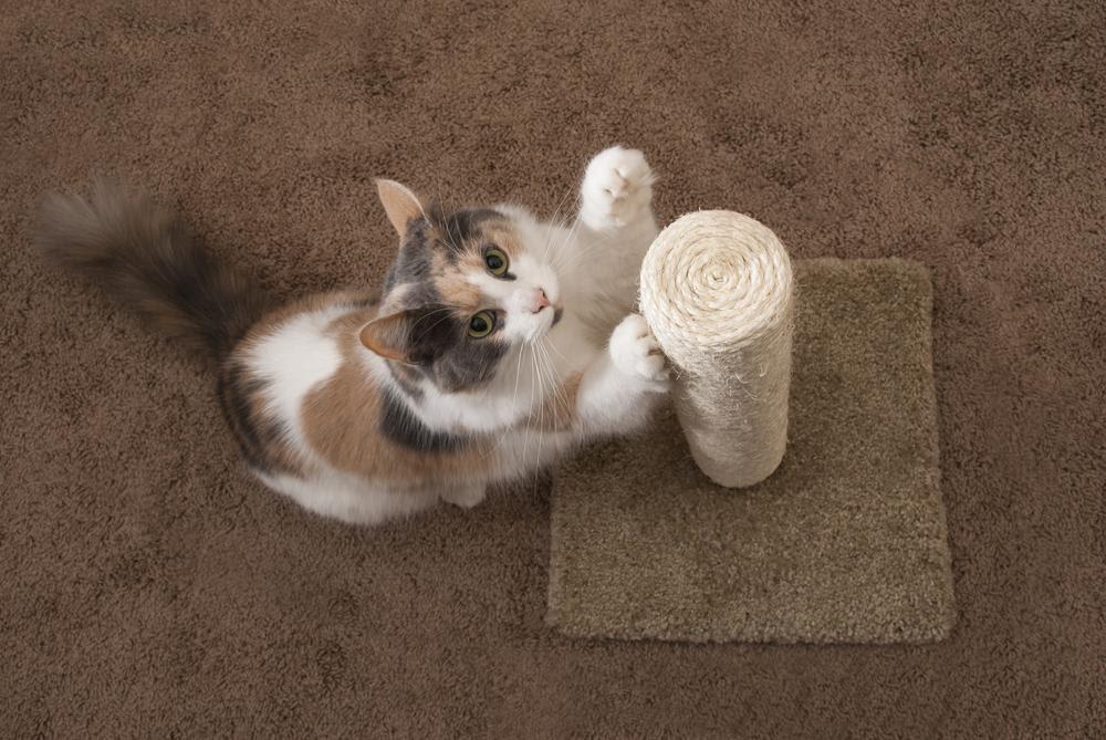 cat scratching cat scratch post