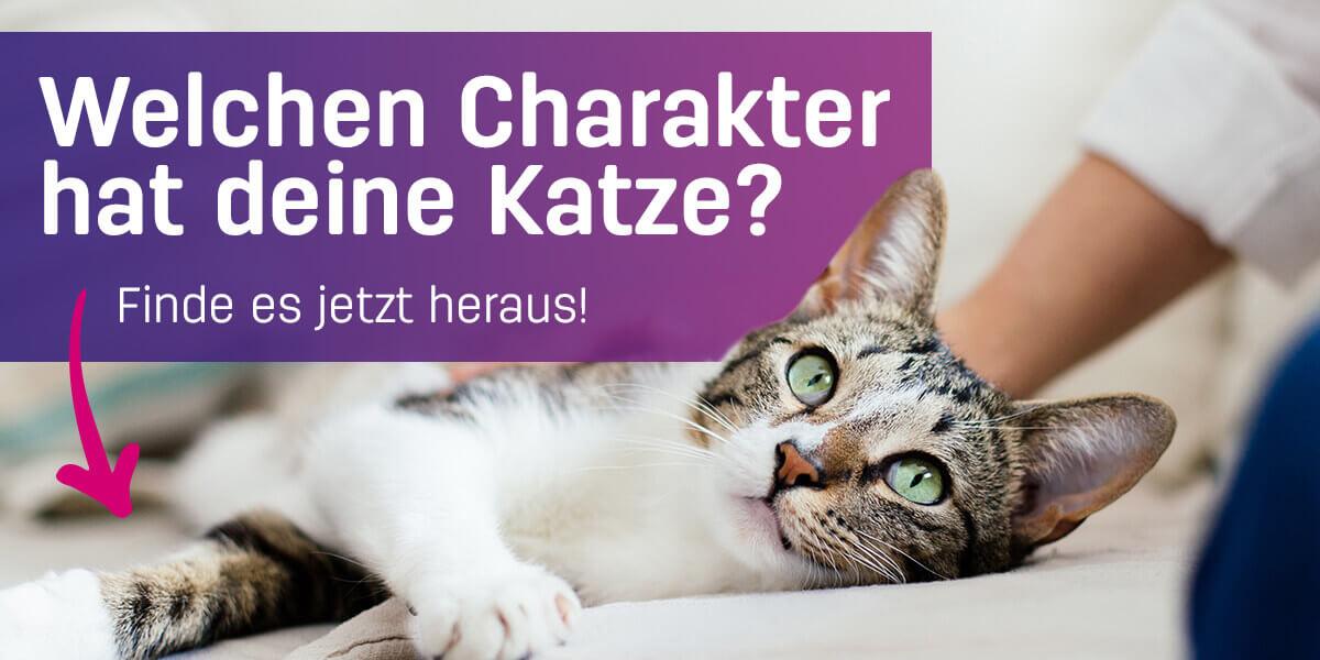 Welchen Charakter hat deine Katze? Jetzt testen