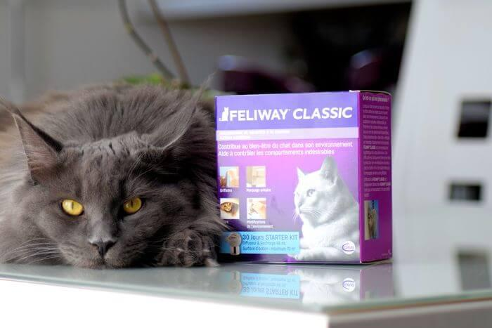 Maine Coon is lying next to a FELIWAY Classic Diffuser box