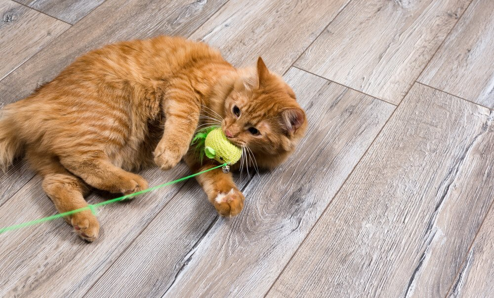 4 Best Kitty Toys for Active Cats_3