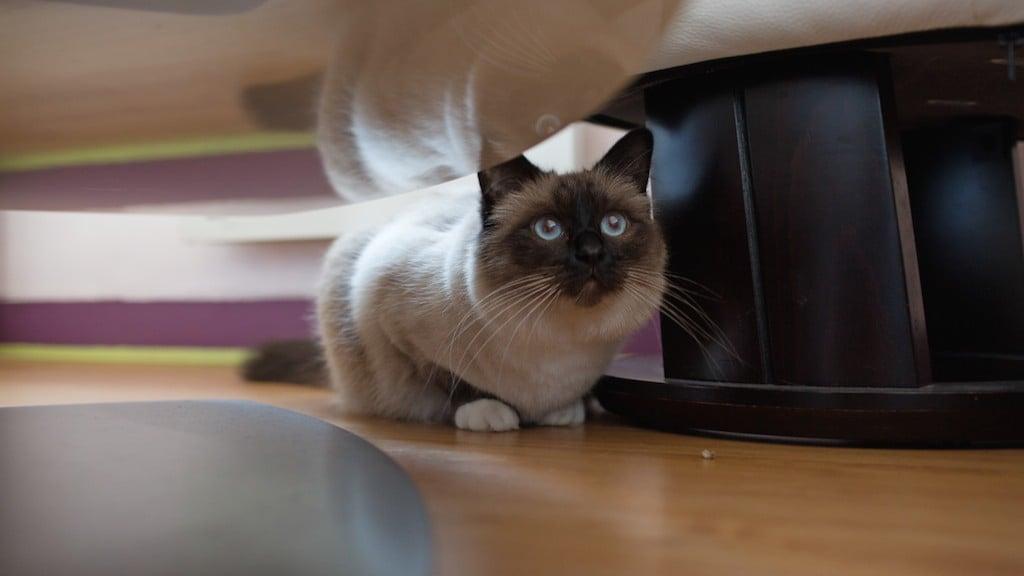 Kattengedrag, leer jouw kat begrijpen