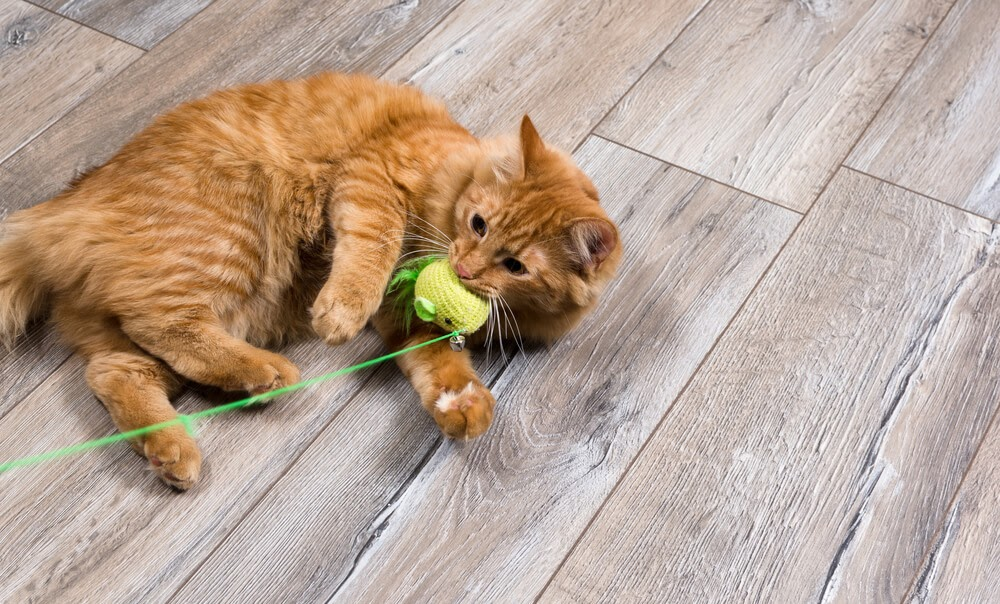 cats toys for active cats