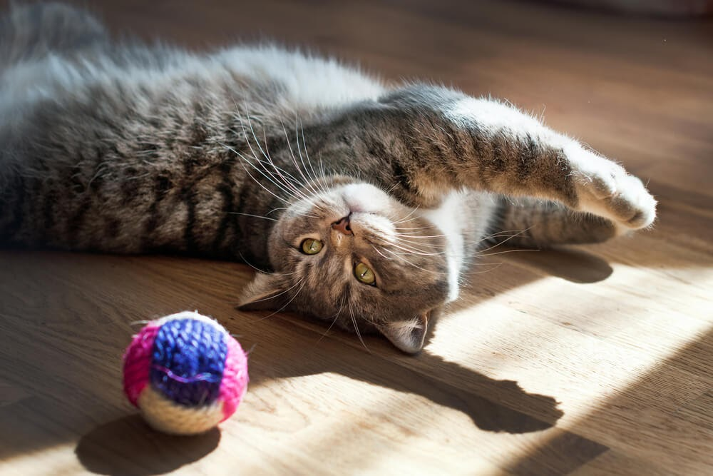 different toys for cats