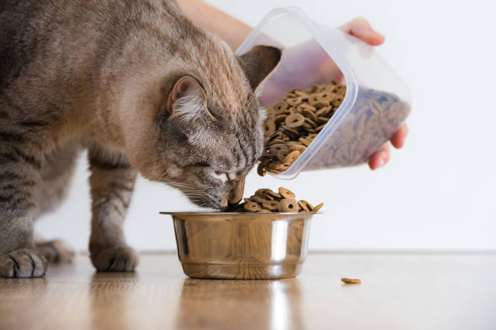 cat fed croquettes