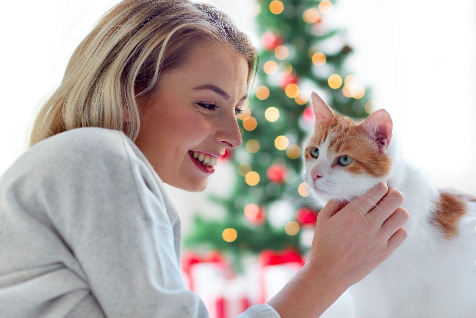 Consejos navidad con gatos 7