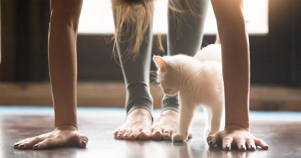 Faites du yoga avec votre chat