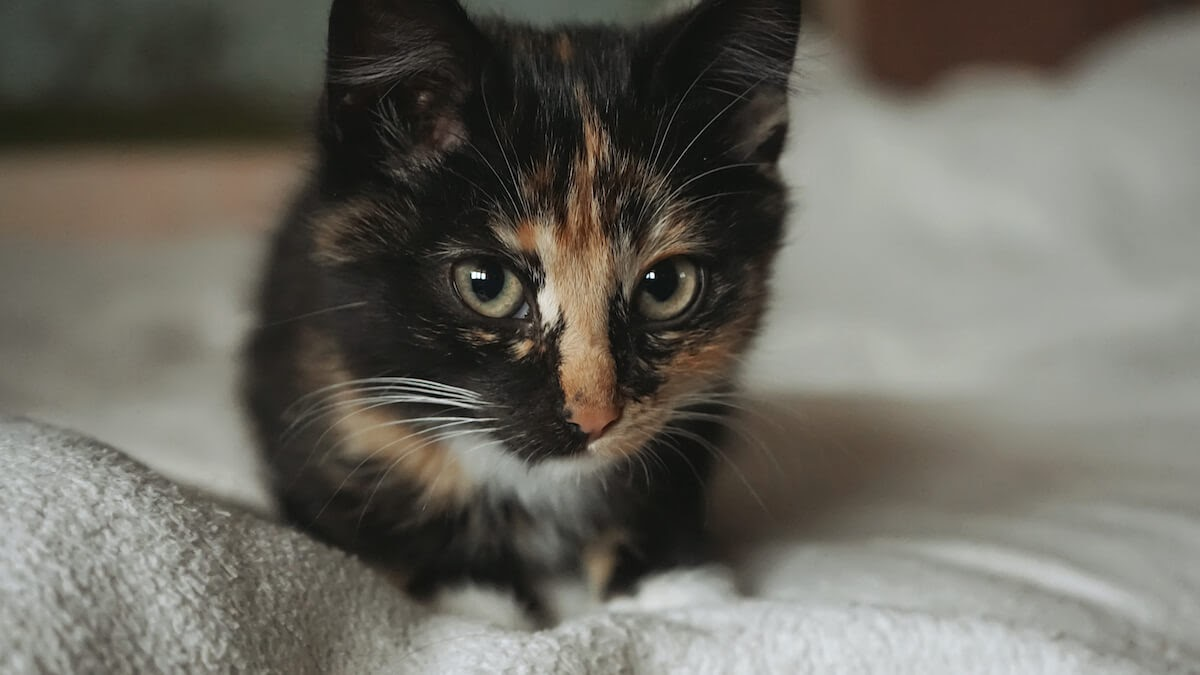 Cats signs of anxiety