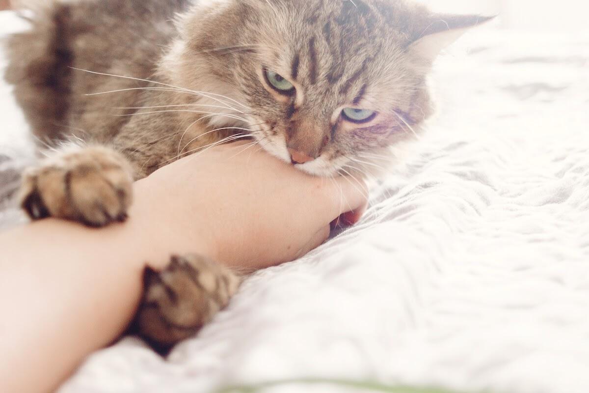 Stop cat bitting me