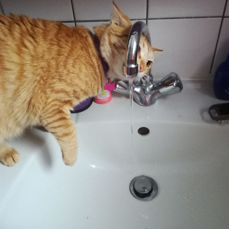 Cat's point of view drinking water