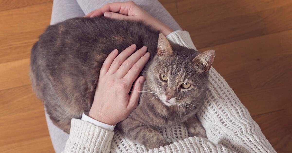 lap-cat-how-to-train-to-stay