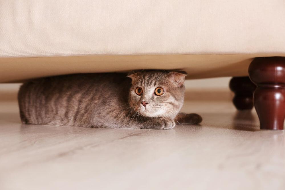 Gato embaixo da cama
