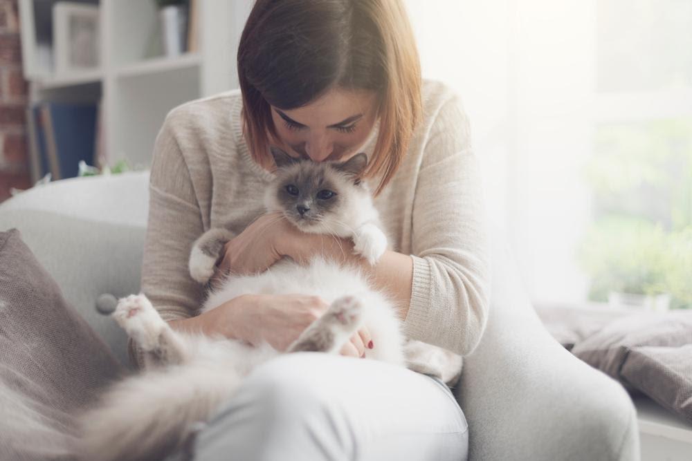 Carinho no gato