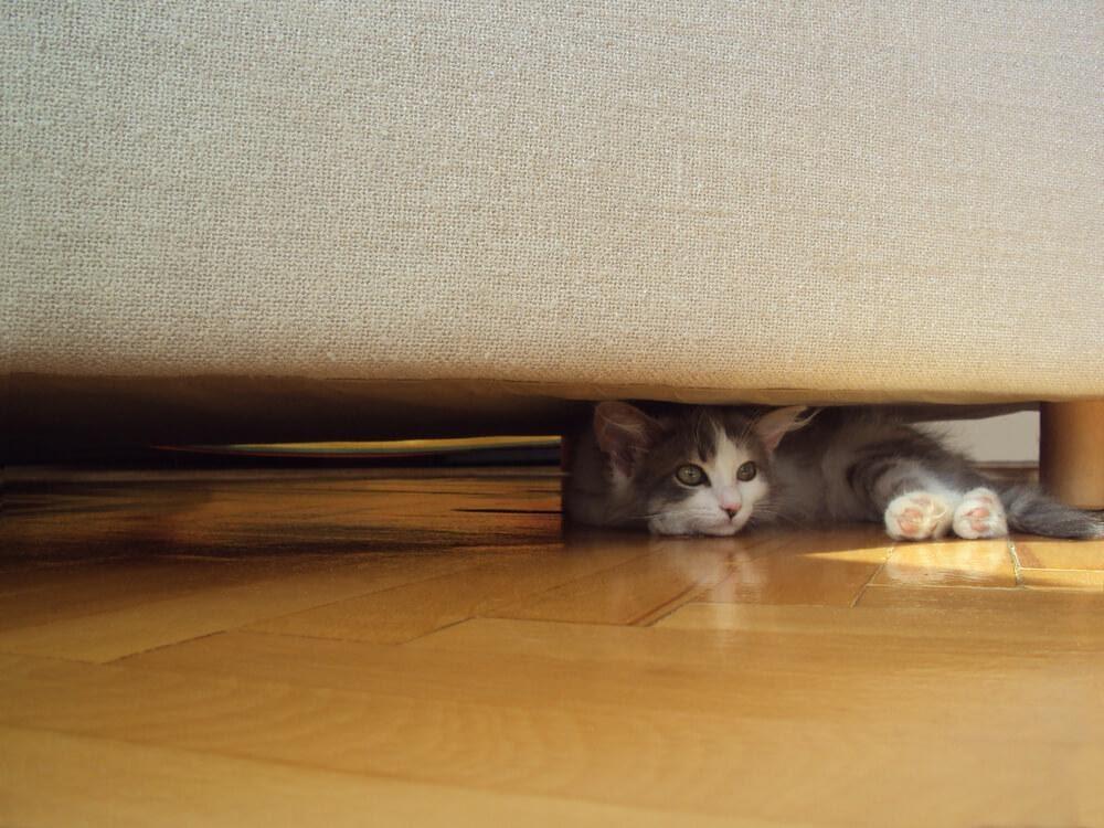 gato cinza se escondendo