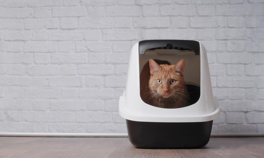 Katt i sin kattlåda