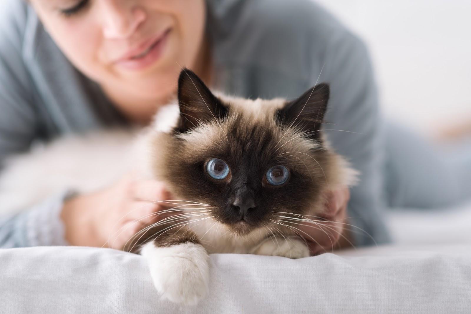 Trygg katt som myser med sin ägare