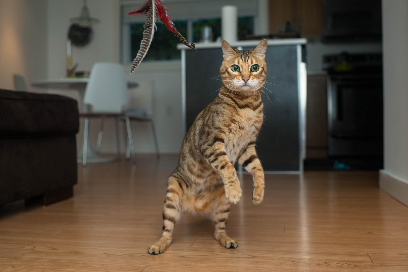 Leksugen katt om kvällen