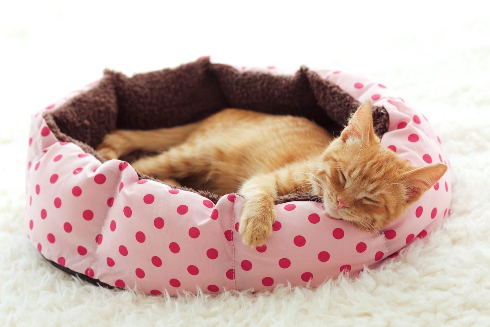 Katt som sover sött i sin bädd