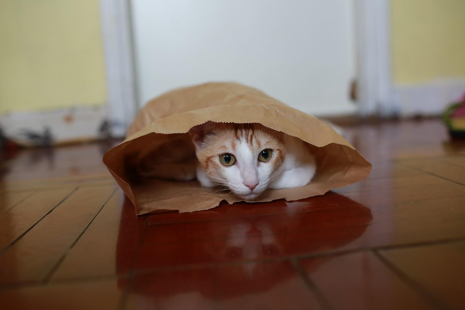 Katt som har sin egentid gömd i en påse