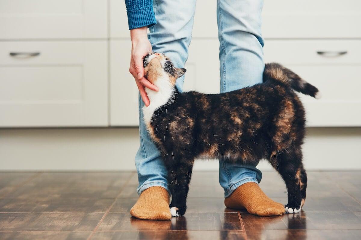 kitten with human