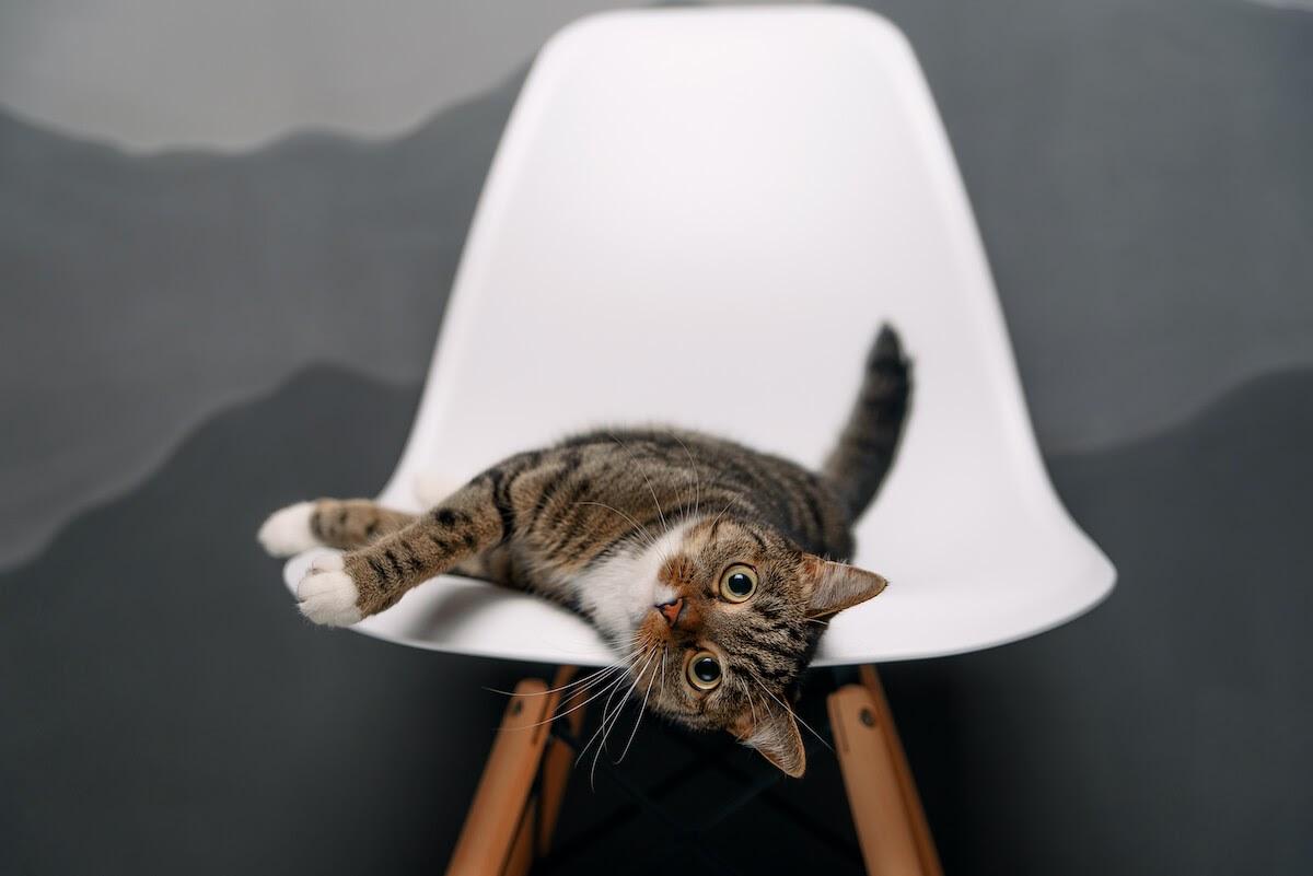 Kitty on a modern chair
