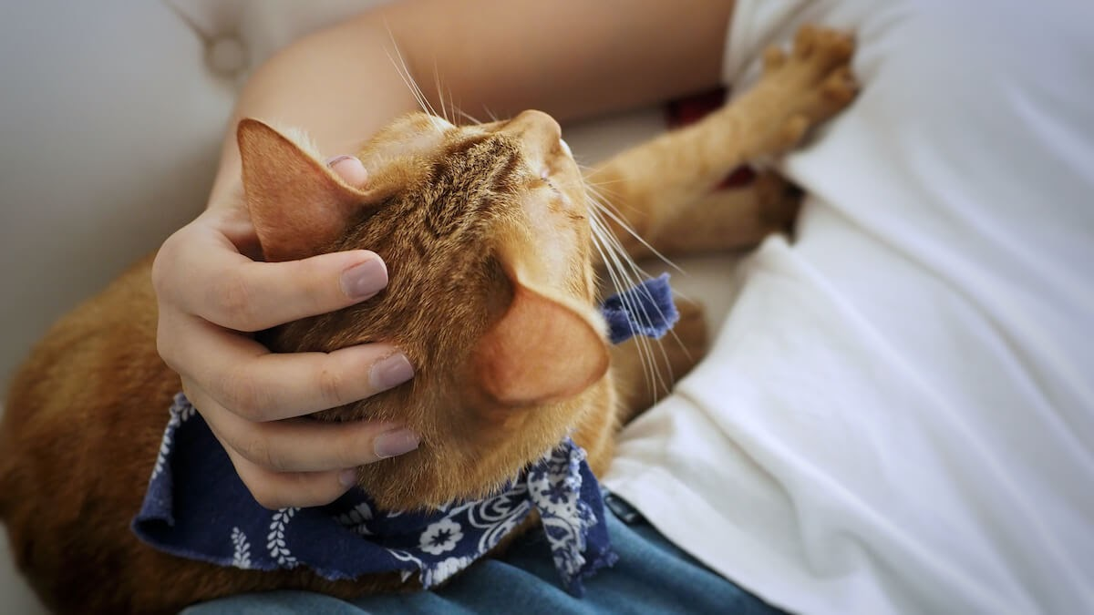 orange cat and woman hand