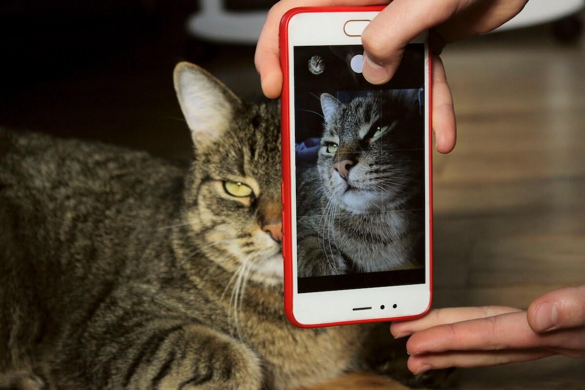 prendre de jolies photos de vos chats