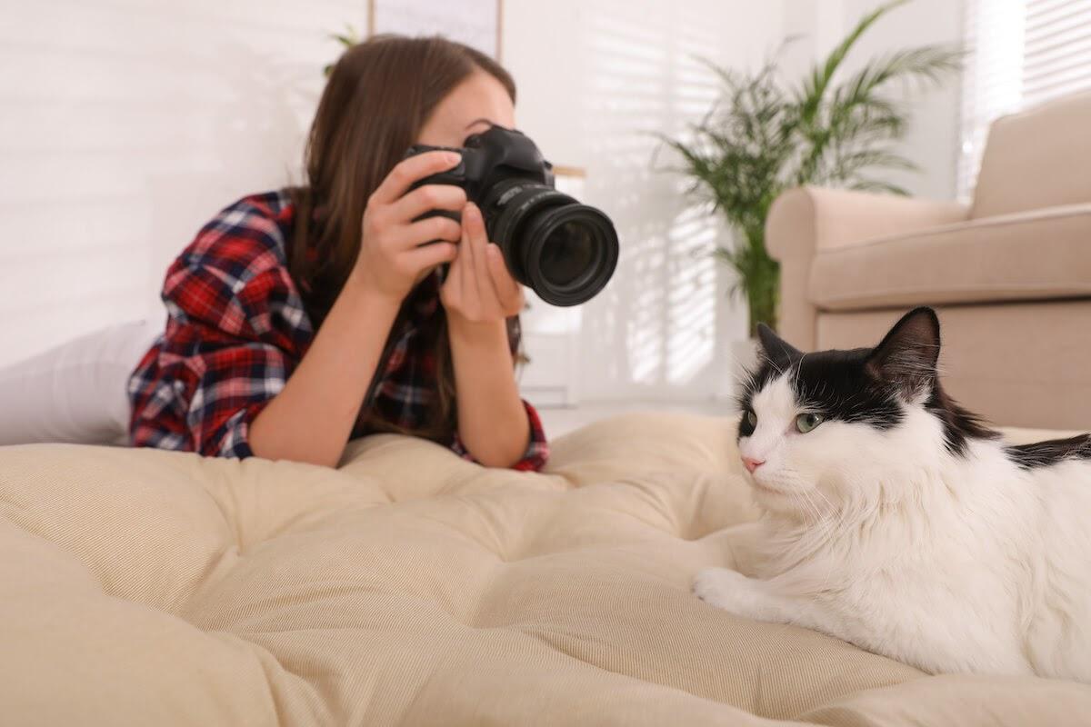 pensez à l'éclairage pour prendre des photos de votre chat