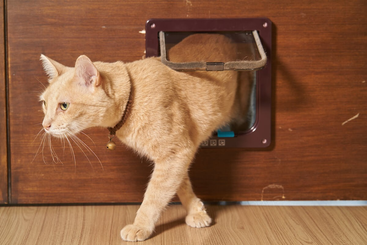 kitty going out of a cat flap